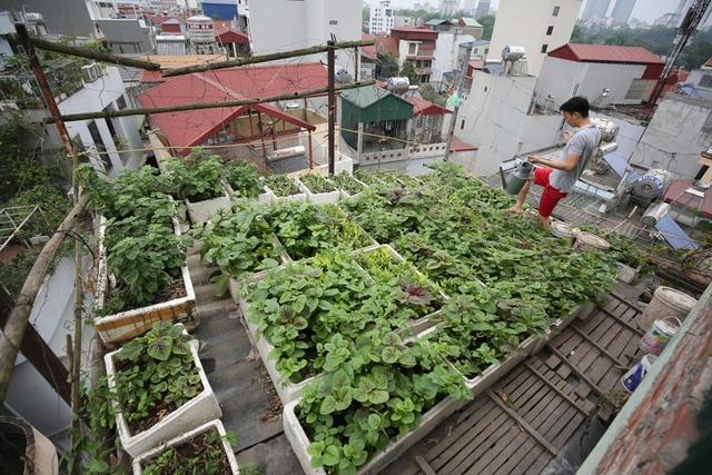 Mô hình kinh tế VAC (vườn ao chuồng) tưởng chừng chỉ áp dụng trên mặt bằng rộng ở nông thôn, thế nhưng chàng trai 24 tuổi Nguyễn Mạnh Tùng đã xây dựng ngay trên nóc nhà 5 tầng của mình, đủ rau thịt sạch ăn quanh năm.