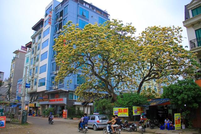 Cây bún nở rộ 2 màu vàng-trắng trước cổng làng Đình Thôn giữa tiết xuân hè tháng tư.