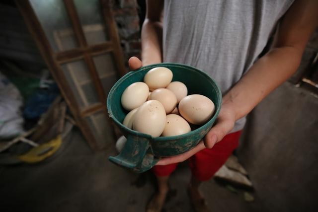 Anh nâng niu từng quả trứng bởi theo anh nó không có thể sạch hơn được nữa.