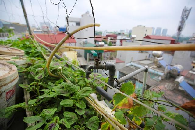 Vòi nước tự động được nối từ tầng 1 lên, giải phóng sức lao động, tiết kiệm thời gian trong việc chăm vườn rau. Đất trước khi trồng phải vụn và trộn thêm vôi bột để tái sử dụng, cây không bị bệnh.