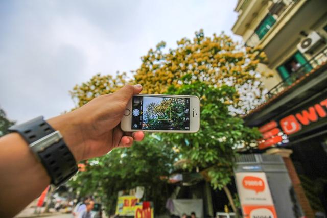 Nhiều người đi qua không khỏi trầm trồ và nhanh chóng ghi lại hình ảnh của cây hoa bún tuyệt đẹp.