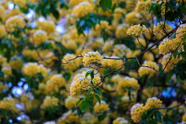 Theo người dân quanh đây, sở dĩ cây có tên gọi như vậy là vì khi hoa nở có hình dáng giống với sợi bún. Mỗi chùm hoa giống như một con bún và cả cây hoa như 1 rổ bún.