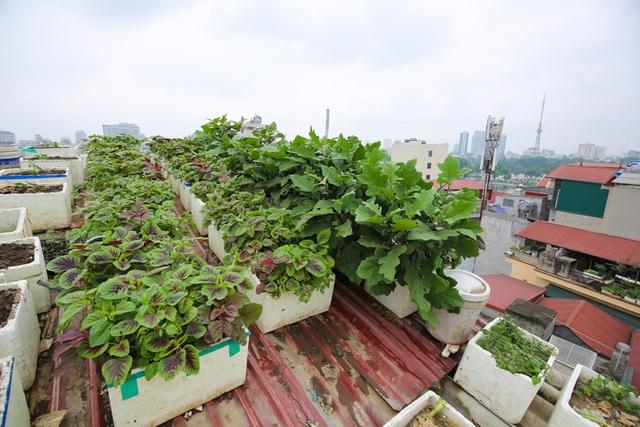 Việc cùng lúc đưa mô hình vườn rau, nuôi gia súc gia cầm và cá vào những khoảng trống trên ngôi nhà 5 tầng giữa thủ đô đem lại hiệu quả kinh tế cao.