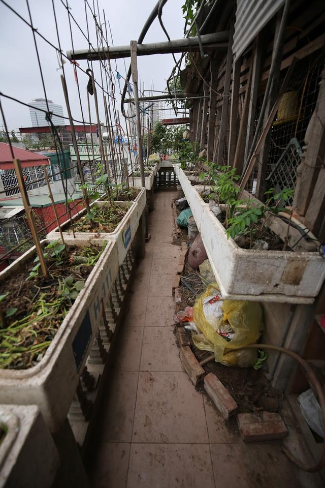 Anh chàng 24 tuổi đã biến ngôi nhà thành một vườn rau di động. Các thùng xốp được tận dụng để trồng rau.