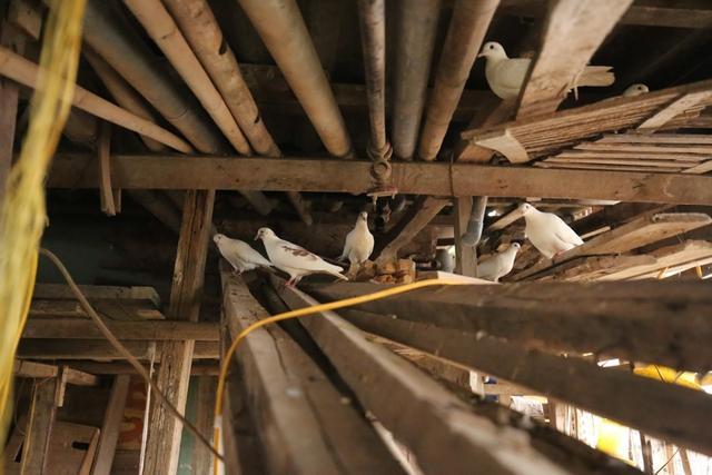 Tầng 5 của căn nhà được quây chuồng nuôi gà, lợn, vịt và chim bồ câu.