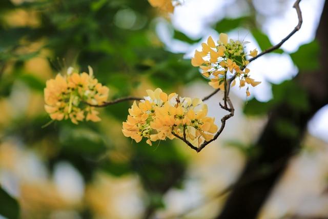 Bún là một loại cây ưa sáng, phát triển rất nhanh. Cây thuộc chi Crateva, họ Cáp hay còn gọi là họ Bạch Hoa hay họ Màn Màn.