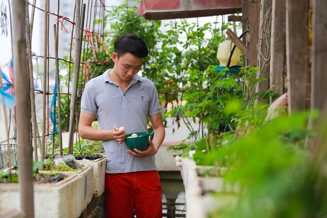 Mỗi ngày, Tùng thường lên chăm sóc vườn rau và thu hoạch trứng.