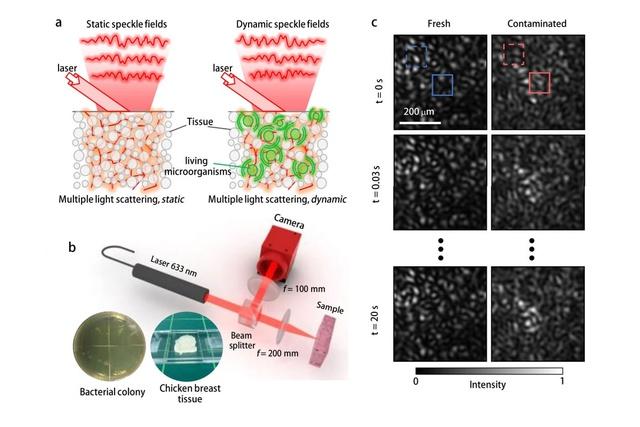 Mô phỏng cách phát hiện vi khuẩn của công nghệ tia laser mới này.