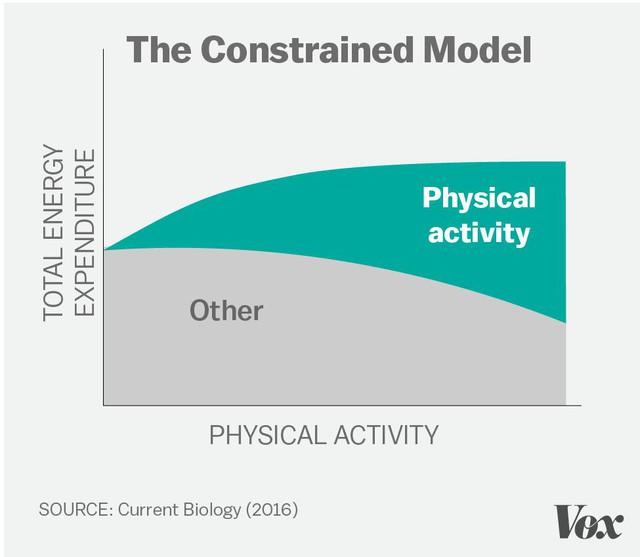 """Dựa trên nghiên cứu này, Pontzer đã đưa ra một mô hình khác kết thúc lối mòn """"calories vào, calories ra"""" . Ông gọi đây là """"mô hình ràng buộc"""" (constrained model), chỉ ra rằng tác động của việc tập luyện đến cơ thể con người không phải theo một đường thẳng. Trong lịch sử tiến hóa, khi nguồn thức ăn khan hiếm, cơ thể con người đã tự tạo ra một giới hạn năng lượng mà nó sẵn sàng tiêu thụ, không cần biết chúng ta vận động nhiều ra sao."""