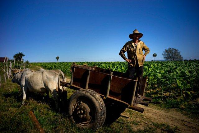 Mối quan hệ giữa Cuba và Mỹ đang dần tốt đẹp lên, những người nông dân đã nhìn thấy cơ hội của họ nhưng vẫn giữ lối sống bình yên, êm ả.