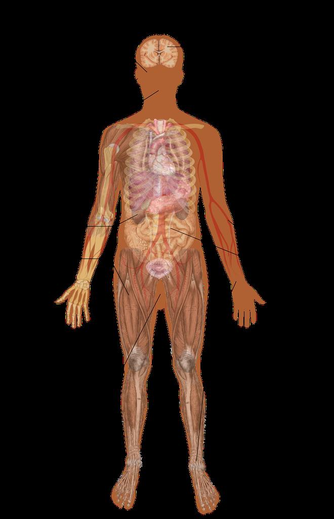 Một số dấu hiệu điển hình trên cơ thể của nhiễm độc chì.