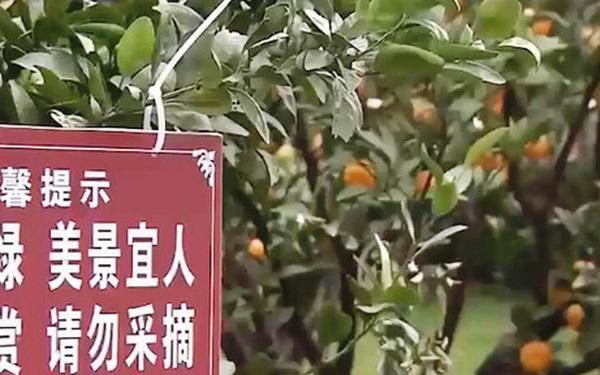 Du lịch xanh - mục tiêu của nhiều địa phương Trung Quốc