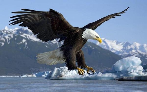 Muốn bay cao, bạn phải cất cánh cùng đại bàng chứ không phải với sẻ non: Chớ mất thời gian với những người không tương xứng về đẳng cấp!
