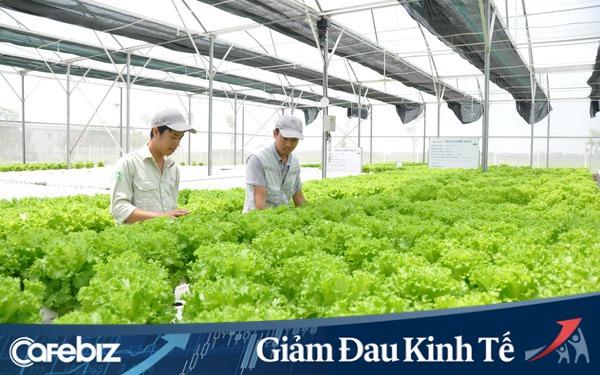Tp. Hà Nội thúc đẩy tăng trưởng ngành Nông nghiệp đối phó với dịch Covid-19