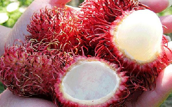 """Xuất khẩu sang nước bạn với giá bán """"xứng tầm"""", người Việt hãnh diện khi sở hữu 6 loại hoa quả đặc sản quen thuộc nhưng mang lại tiềm lực kinh tế cao"""