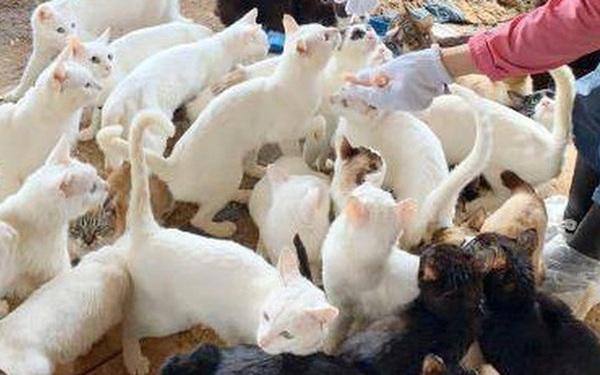 Một gia đình Nhật Bản bị khởi tố vì... nuôi 238 con mèo
