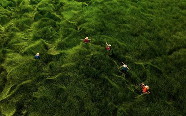 """Bộ ảnh đồng cỏ Việt Nam """"lượn sóng"""" đang gây bão mạng quốc tế, nhưng cả ngàn người nước ngoài lại bị nhầm lẫn ở một điểm này"""