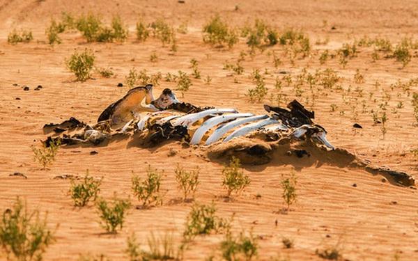 Đại tuyệt chủng lần 6 đang diễn ra nhanh hơn nhiều so với mọi dự báo, thủ phạm gây ra chính là con người