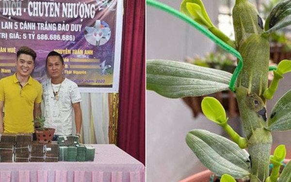 Chiêm ngưỡng cây lan Bảo Duy 5 cánh trắng giá 5,6 tỷ đồng của đại gia Thái Nguyên