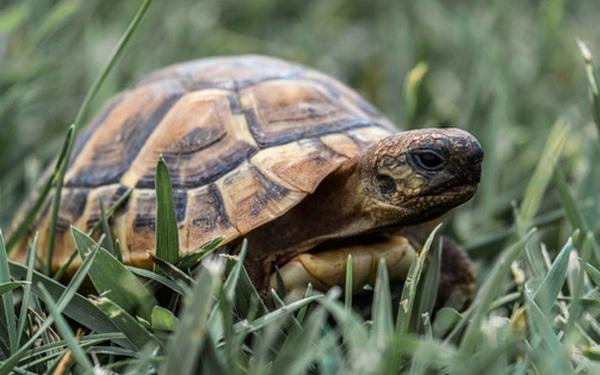 Bỏ khoản tiền lớn ra cứu 1 con rùa, vài ngày sau, người đàn ông nhận được báo đáp ngoài tưởng tượng