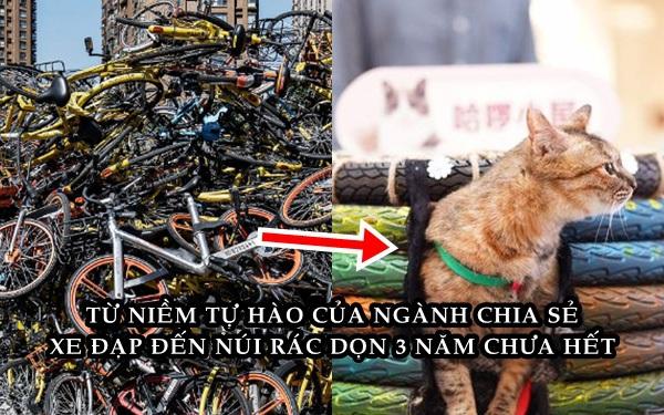 Số phận những chiếc xe đạp hỏng sau sự sụp đổ của dịch vụ chia sẻ ở Trung Quốc: Bị tháo ra làm ghế, đèn và nhà cho mèo hoang