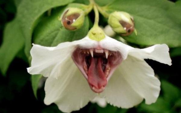 """Ba loài thực vật """"sát thủ"""" của nhân loại, loài thứ 3 giết chết 7 triệu người mỗi năm!"""