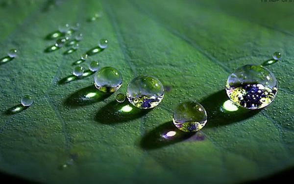 3 bài học từ nước, trọn đời an nhiên: Sống - Tư duy - Thay đổi linh hoạt như nước