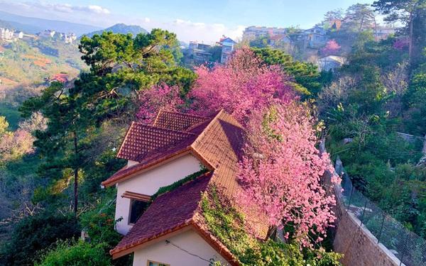 Rời Sài Gòn, cặp vợ chồng lên Đà Lạt xây ngôi nhà hướng mặt ra thung lũng, nhìn vườn hoa đào đẹp như cổ tích mà mê mệt