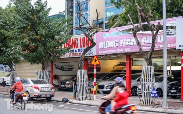 Hàng cây sưa 'trăm tỷ' chết khô trên phố Hà Nội sẽ xử lý thế nào?