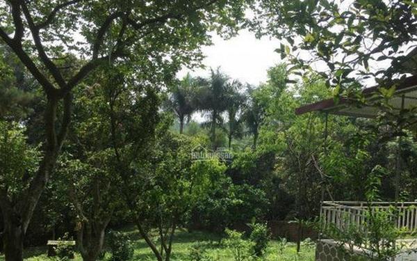 'Bỏ phố về quê' làm nhà vườn, chưa kịp hưởng lại rao bán gấp, cho mượn miễn phí