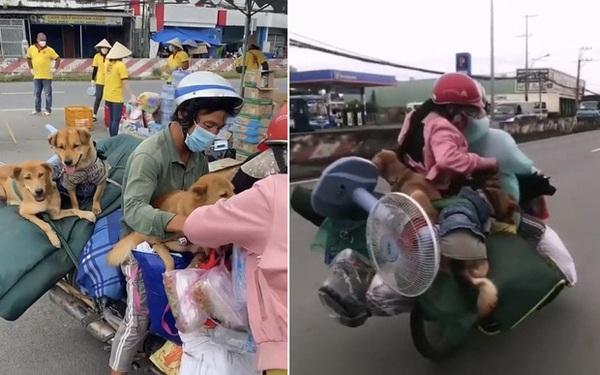 """Đôi vợ chồng chở 15 chú chó theo về quê bị tiêu hủy: """"Thương chúng như con, làm được 250k thì dành 100k mua thức ăn cho chúng"""""""