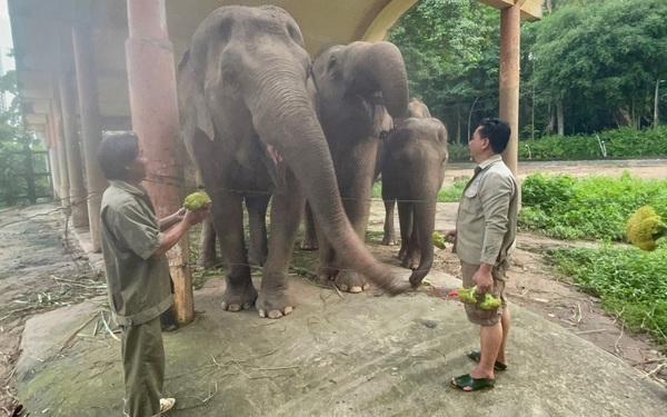 AEON Việt Nam hỗ trợ thức ăn cho các loài động vật ở Thảo Cầm Viên, mỗi tuần 400kg