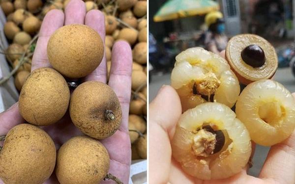 Việt Nam có loại nhãn lạ, cùi cuộn như bắp cải, giá cao gấp 5 lần nhãn thường vẫn được săn lùng