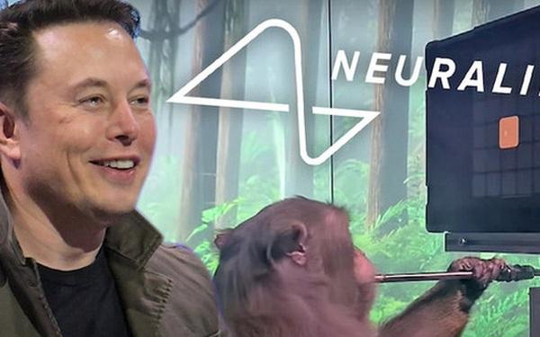 Tận mắt chứng kiến con khỉ của Elon Musk chơi game như người