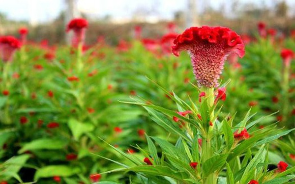 Hạt giống Việt Nam được đưa lên trồng trên vũ trụ