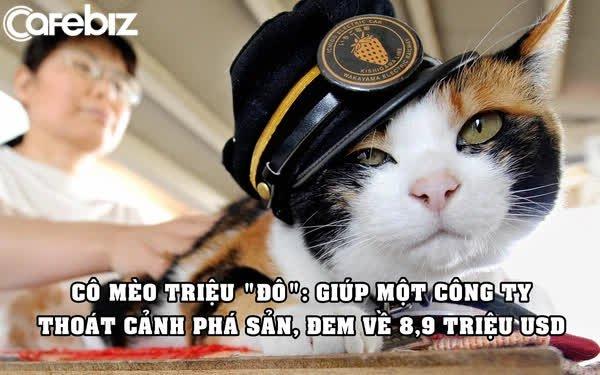 Marketing đỉnh cao: Chỉ dùng một con mèo hoang thu về 8,9 triệu USD, cứu công ty thoát cảnh phá sản