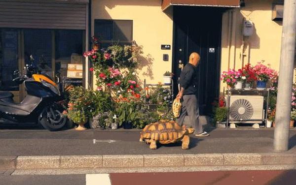 Ông lão người Nhật nuôi con rùa nặng 70kg, quãng đường 5 phút đi mất 3 tiếng: Sống chậm lại, cuộc đời quả thực đáng yêu hơn bạn nghĩ