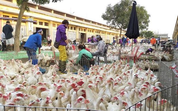 Hà Nội: Phát hiện ổ dịch cúm gia cầm A/H5N8, lại lo bùng phát tại các chợ đầu mối
