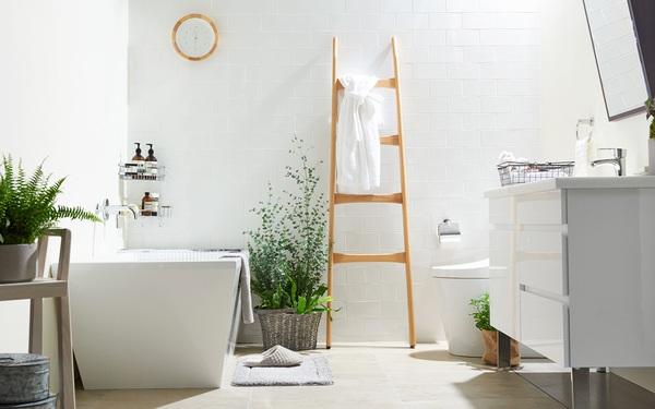 8 loài cây phù hợp trồng trong phòng tắm, vừa giúp trang trí vừa lọc không khí, khử mùi hiệu quả