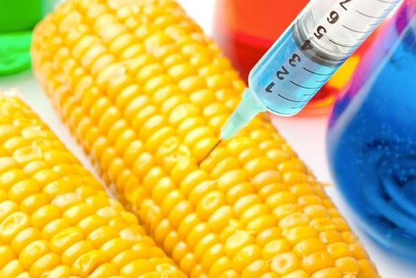 Cây trồng biến đổi gen: Mối lo ngại đang dần được gỡ bỏ