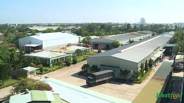 Inside Factory: Thăm nhà máy chế biến trái cây xuất khẩu của TSC
