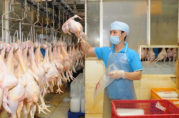 Giải nguy chăn nuôi gà