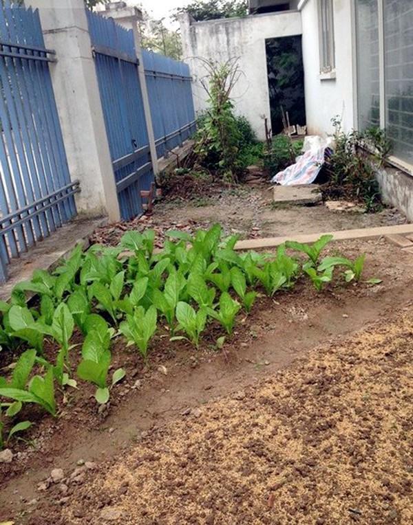 Ra bãi sông Hồng thuê 10m2 đất trồng rau sạch