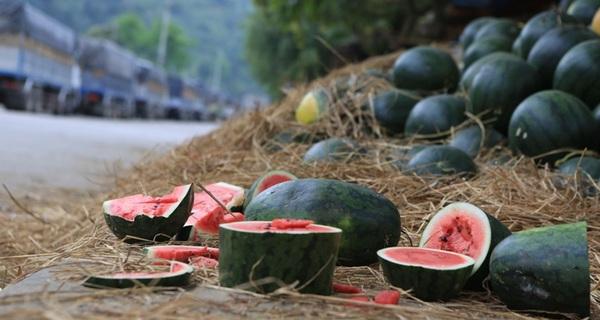 Đến hẹn lại lên, Bộ Công - Nông đi tìm đường cho dưa hấu Việt Nam sang Trung Quốc