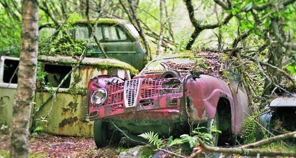 Hàng trăm xe hơi cổ bị bỏ rơi bên trong khu rừng rậm ở Thụy Điển