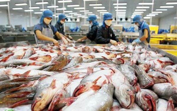 USD tăng mạnh, xuất khẩu cá tra gặp khó
