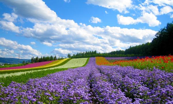 Hokkaido – Điều thần kỳ của Nhật Bản