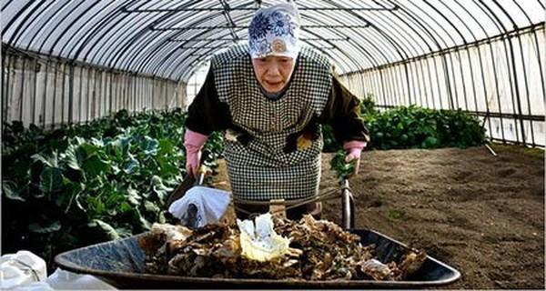 """Bài toán hóc búa của Nhật Bản mang tên """"người già"""""""