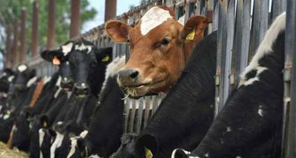 """Giá thịt lợn, bò đắt hơn cả Mỹ, Úc, """"cửa"""" nào cho nông nghiệp Việt Nam thời hội nhập?"""