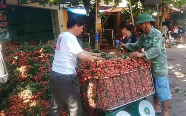 Thương lái TQ ngừng mua: Vải Lục Ngạn rớt thảm còn 4.000 đồng/kg